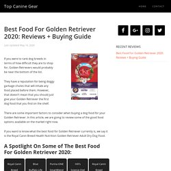 Best Food For Golden Retriever 2020: Reviews + Buying Guide
