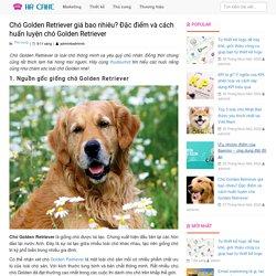 Chó Golden Retriever giá bao nhiêu? Đặc điểm và cách huấn luyện chó Golden Retriever - Thudaumot