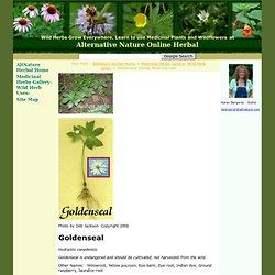 Goldenseal Herbal Medicine Use