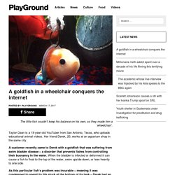 A goldfish in a wheelchair conquers the internet – PlayGround+