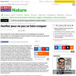 NOUVEL OBS 04/02/09 Gonfler pour ne pas se faire croquerPour éviter de ce faire détruire par les macrophages du système immunita
