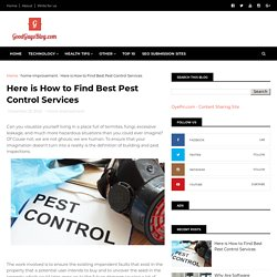 Here is How to Find Best Pest Control Services
