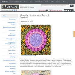 PDB-101: Goodsell Gallery: Coronavirus