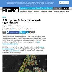 A Gorgeous Atlas of New York Tree Species