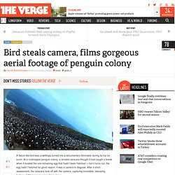 Bird steals camera, films gorgeous aerial footage of penguin colony