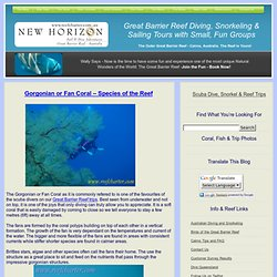 Gorgonian or Fan Coral