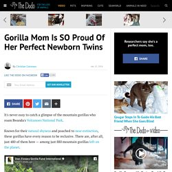 Gorilla Mom Is SO Proud Of Her Perfect Newborn Twins
