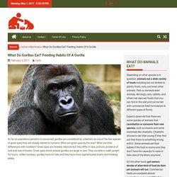 What Do Gorillas Eat? Feeding Habits Of A Gorilla