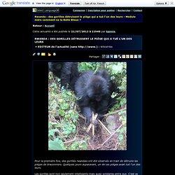 Module mère comment va la belle bleue ? - Rwanda : des gorilles détruisent le piège qui a tué l'un des leurs
