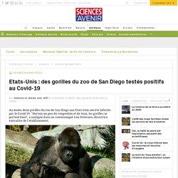 AFP 11/01/21 Californie: des gorilles du zoo de San Diego testés positifs au Covid-19
