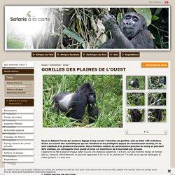 Safari au Congo - Safaris à la carte