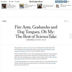 The Best of ScienceTake