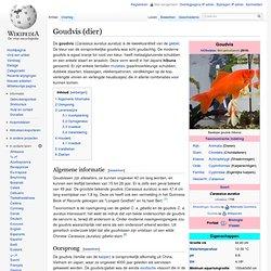 Goudvis (dier)