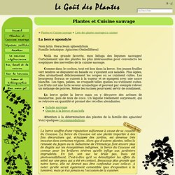 Le Goût des Plantes - La berce spondyle