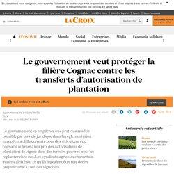 Le gouvernement veut protéger la filière Cognac contre les transferts d'autorisation de plantation - La Croix