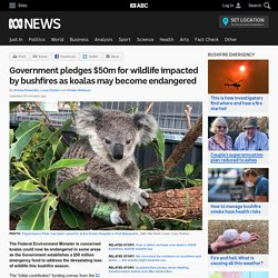 Government pledges $50m for wildlife impacted by bushfires as koalas may become endangered