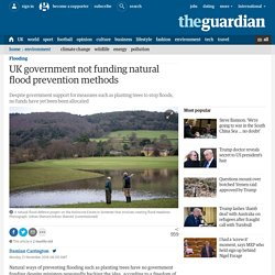 *Soft engineering: UK government not funding natural flood prevention methods