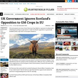 UK Government Ignores Scotland's Opposition to GM Crops in EU
