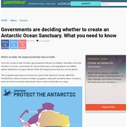 Governments are deciding whether to create an Antarctic Ocean Sanctuary. What you need to know