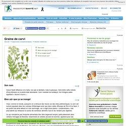 La graine de carvi : bénéfique pour les gaz intestinaux