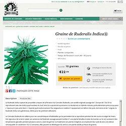 Graine de Ruderalis Indica®