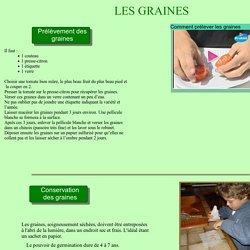 Conserver des graines de tomates
