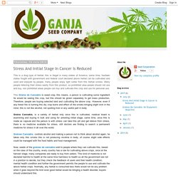 Graines de cannabis: Stress And Initial Stage In Cancer Is Reduced