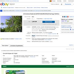 20 Graines Seeds DE Baton Mouroungue Moringa Oleifera