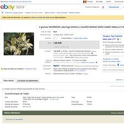 4 Graines Neverdier Moringa Oleifera Caudex Bonsaï Seeds Samen Semilla Z107