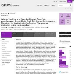 Cellular Tracking and Gene Profiling of Fusarium graminearum during Maize Stalk Rot Disease Development Elucidates Its Strategies in Confronting Phosphorus Limitation in the Host Apoplast