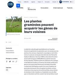 Les plantes graminées peuvent acquérir les gènes de leurs voisines
