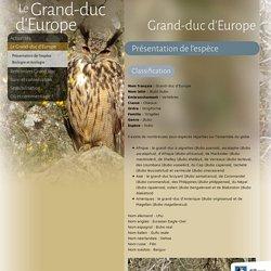 Le Grand-duc d'Europe - Grand-duc - LPO Rapaces
