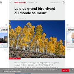 Le plus grand être vivant du monde se meurt - Edition du soir Ouest France - 01/08/2016