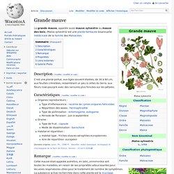 Grande mauve (Wikipédia)