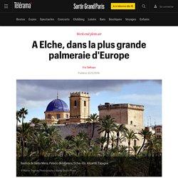 A Elche, dans la plus grande palmeraie d'Europe - Sortir Grand Paris