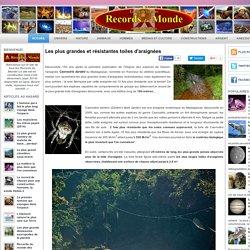 Les plus grandes et résistantes toiles d'araignées ~ Records du Monde