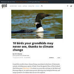 10 birds your grandkids may never see, thanks to climate change
