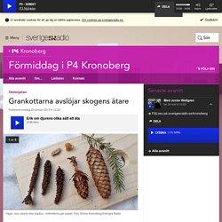 Grankottarna avslöjar skogens ätare - Förmiddag i P4 Kronoberg