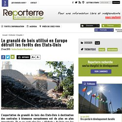 Le granulé de bois utilisé en Europe détruit les forêts des Etats-Unis