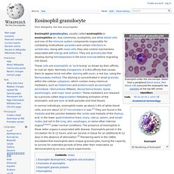 Eosinophil granulocyte