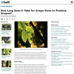 How Long Does It Take for Grape Vines to Produce Grapes?