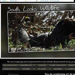 Jeu de graphisme et de profondeur sur les Zèbres de Grevy - South looks wildlife