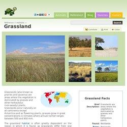 Grassland - Reference