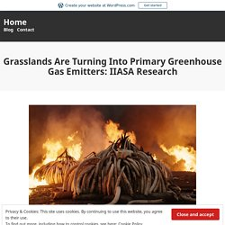 Grasslands Are Turning Into Primary Greenhouse Gas Emitters: IIASA Research – Home