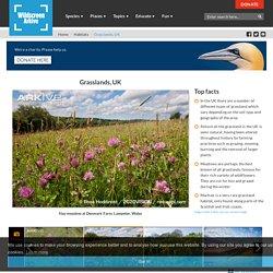 UK Grasslands