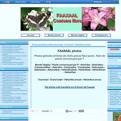 Photos gratuites et libres de droits : Tournesol - Helianthus annus