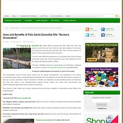 "Uses and Benefits of Palo Santo Essential Oils ""Bursera Graveolens"""