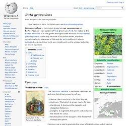 Rue (Ruta Graveolens)