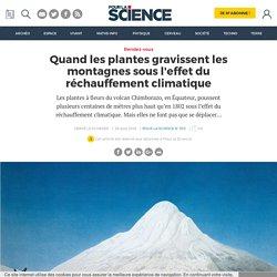 Quand les plantes gravissent les montagnes sous l'effet du réchauffement climatique