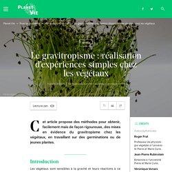 Le gravitropisme : réalisation d'expériences simples chez les végétaux